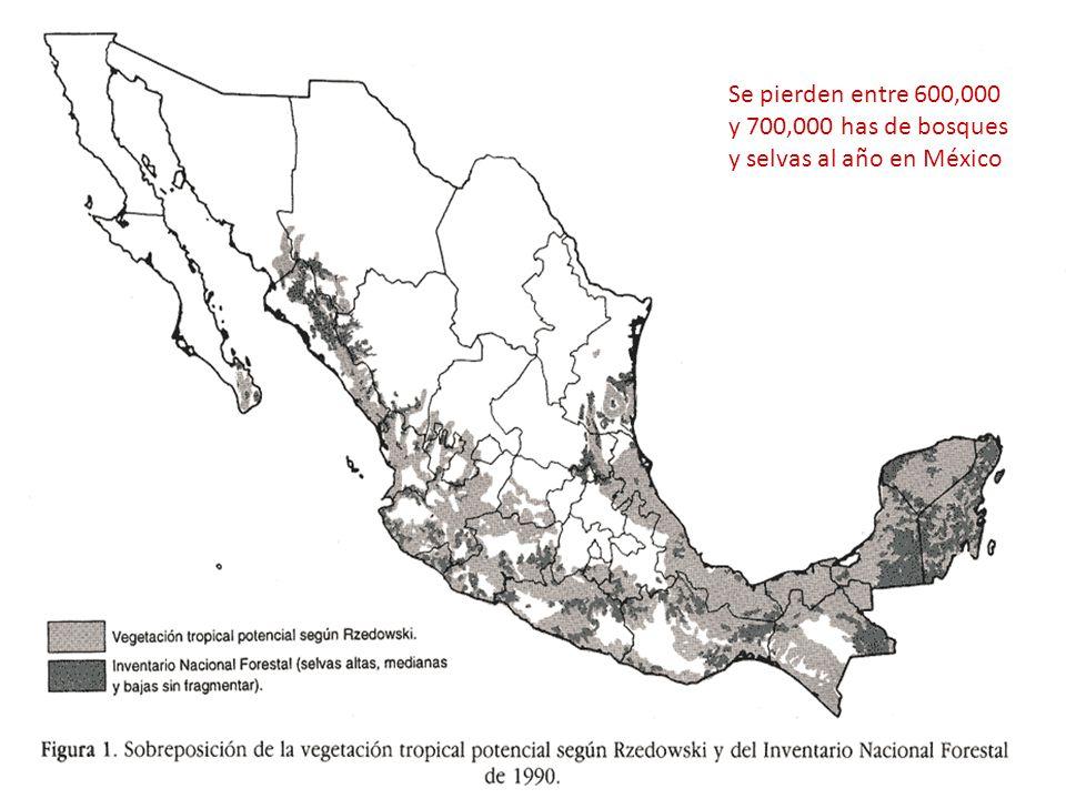 Se pierden entre 600,000 y 700,000 has de bosques y selvas al año en México