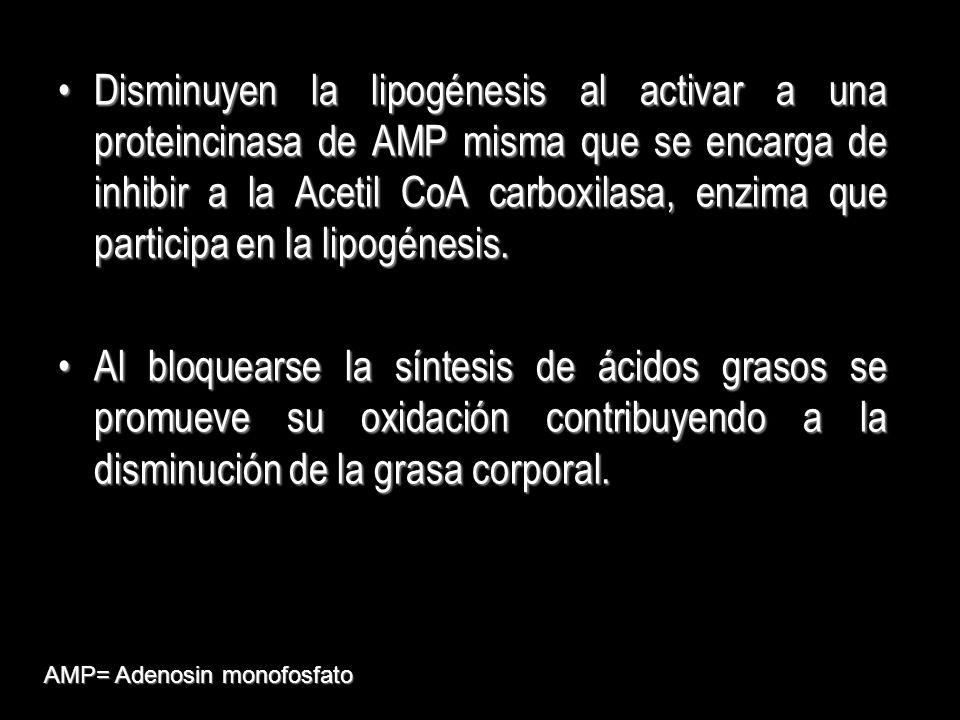 Disminuyen la lipogénesis al activar a una proteincinasa de AMP misma que se encarga de inhibir a la Acetil CoA carboxilasa, enzima que participa en l