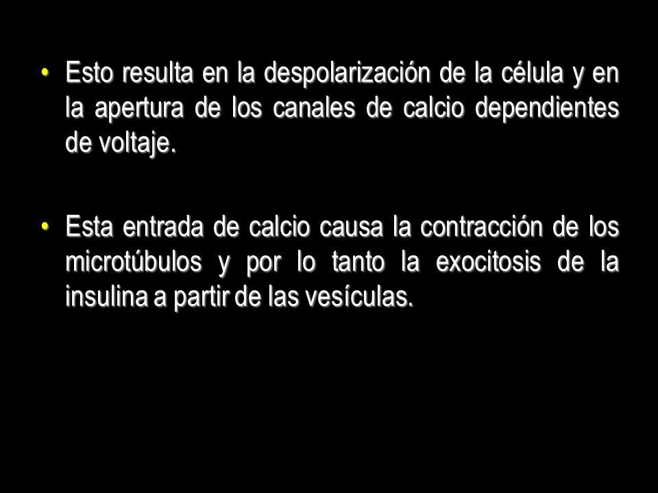 Esto resulta en la despolarización de la célula y en la apertura de los canales de calcio dependientes de voltaje.Esto resulta en la despolarización d