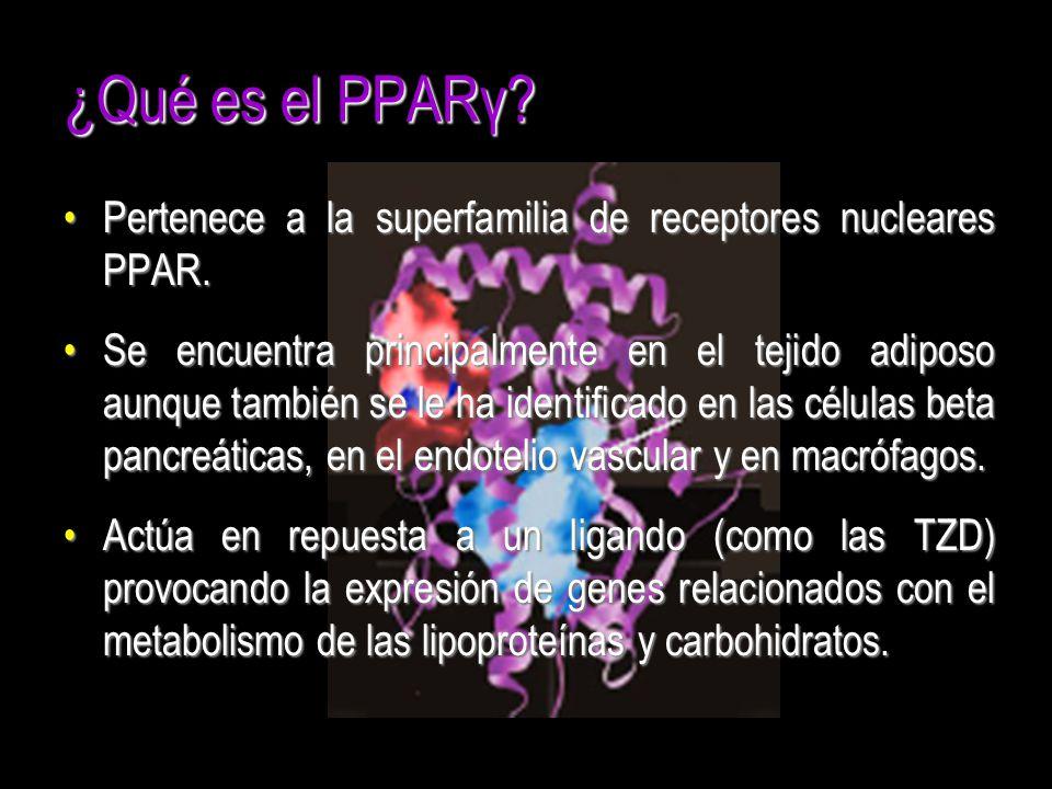 ¿Qué es el PPARγ? Pertenece a la superfamilia de receptores nucleares PPAR.Pertenece a la superfamilia de receptores nucleares PPAR. Se encuentra prin
