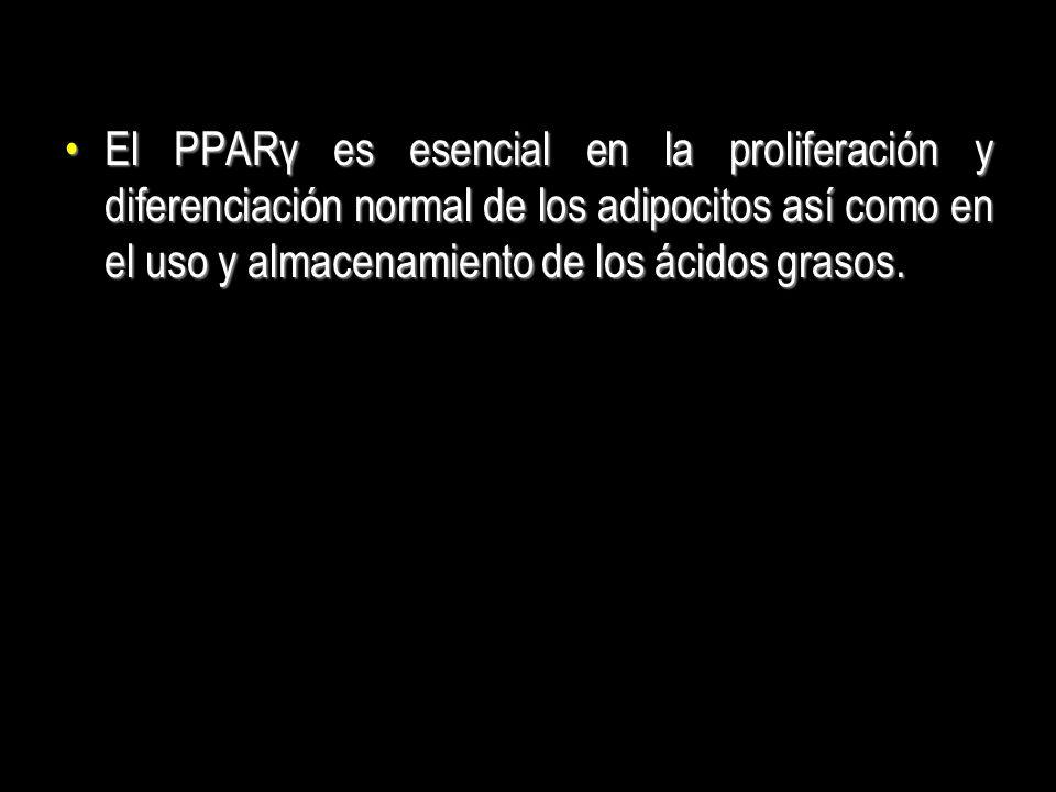 El PPARγ es esencial en la proliferación y diferenciación normal de los adipocitos así como en el uso y almacenamiento de los ácidos grasos.El PPARγ e