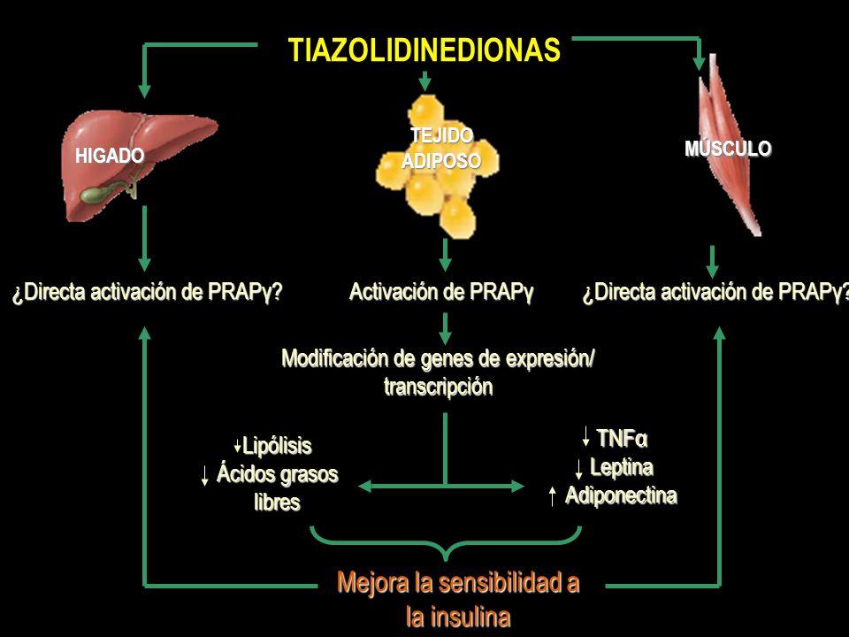 TIAZOLIDINEDIONAS HIGADO TEJIDO ADIPOSO MÚSCULO Activación de PRAPγ Modificación de genes de expresión/ transcripción ¿Directa activación de PRAPγ? Me