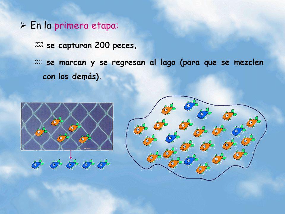 En la primera etapa: se capturan 200 peces, se marcan y se regresan al lago (para que se mezclen con los demás).