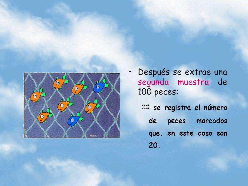 Después se extrae una segunda muestra de 100 peces: se registra el número de peces marcados que, en este caso son 20.