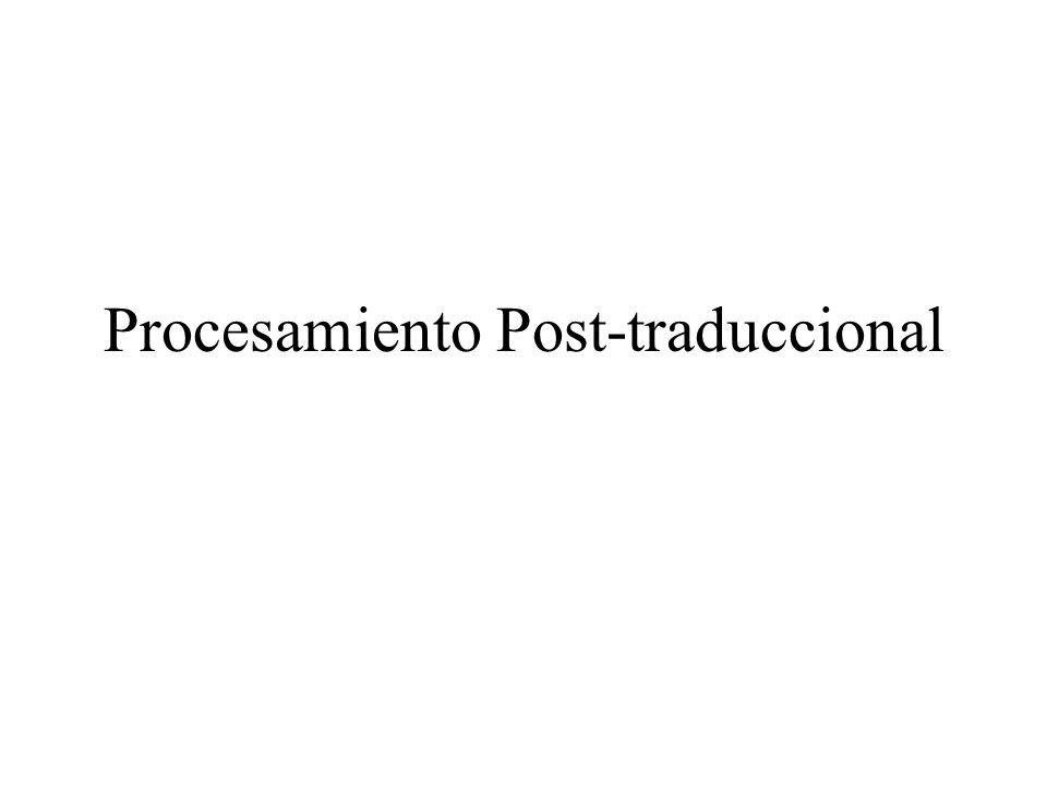 Procesamiento Post-traduccional
