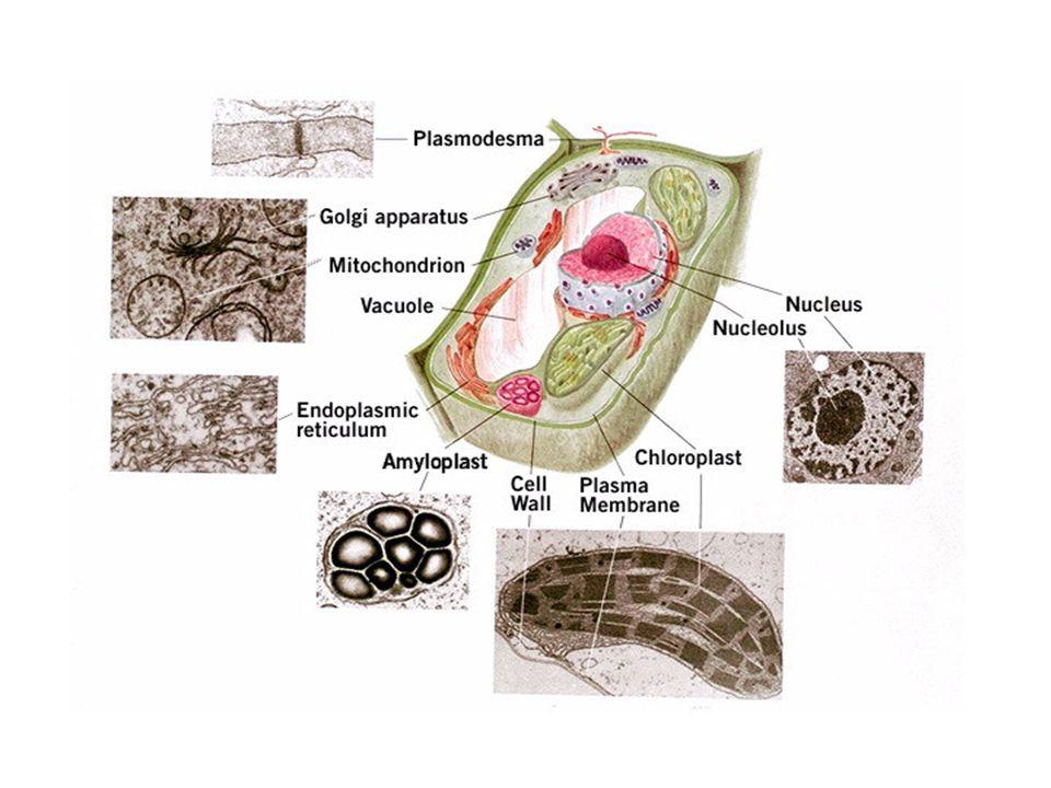 Secreción de proteínas