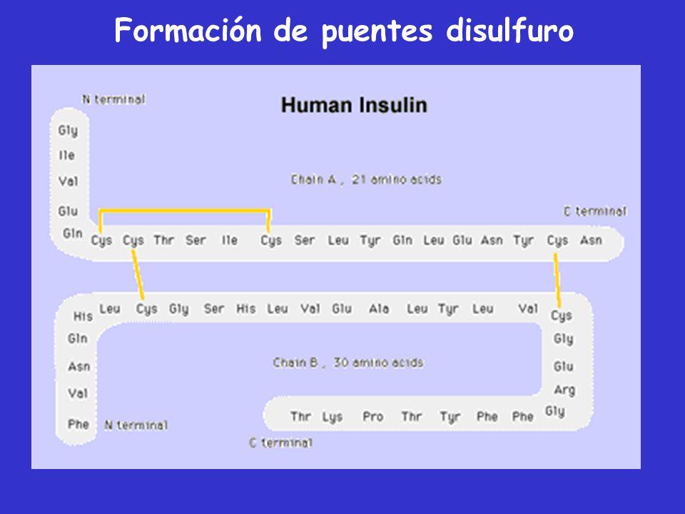 Procesamiento enzimático