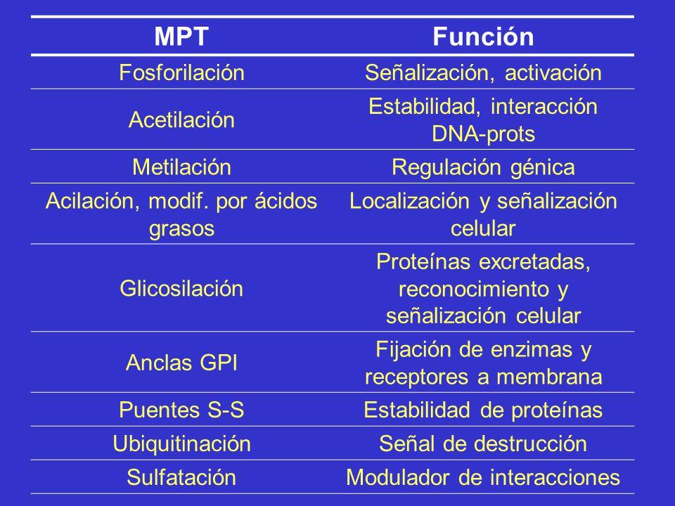 Cuatro grandes grupos Plegamiento de la proteína Procesamiento proteolítico Modificaciones químicas Separación de inteínas Modificaciones post-traducc