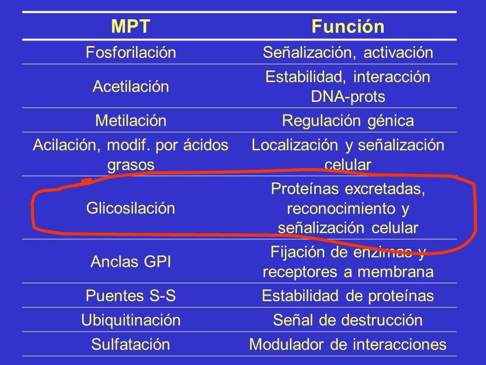 NombreSitioModificación AcetilaciónTerminal NH2-Replaced by CH 3 CONH- MiristilaciónTerminal NH2-Replaced by CH 3 (CH 2 ) 12 CONH- PalmitoilaciónTermi