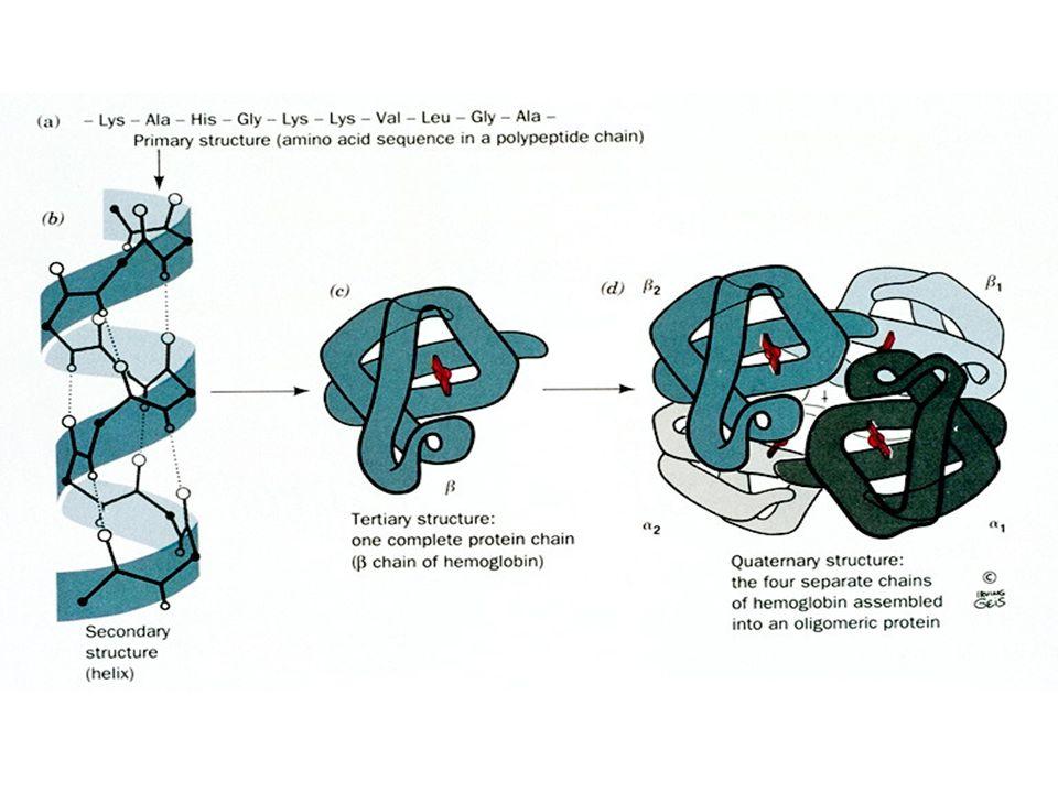 Plegamiento de proteínas