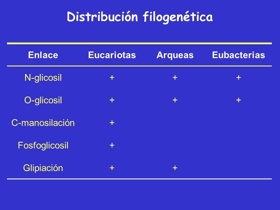 La N-glicosilación