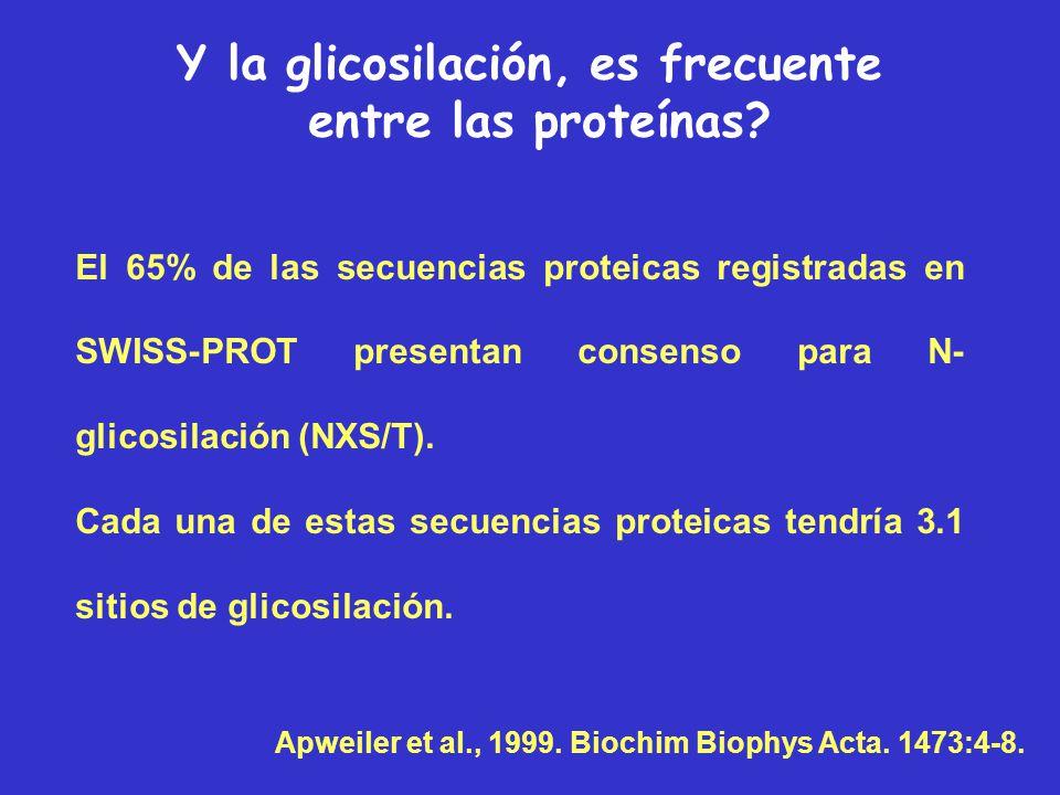 EnlaceEucariotasArqueasEubacterias N-glicosil+++ O-glicosil+++ C-manosilación+ Fosfoglicosil+ Glipiación++ Distribución filogenética