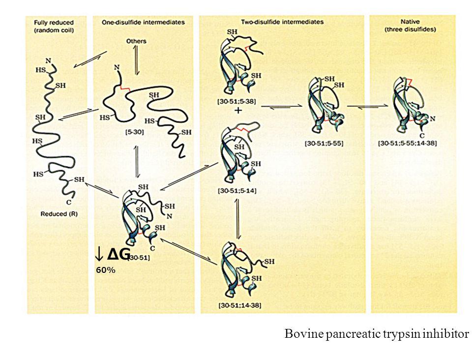 60% ΔGΔG Bovine pancreatic trypsin inhibitor