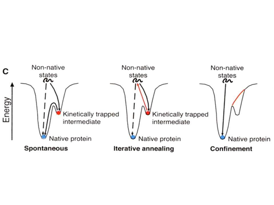 Vesícula recubierta de una reja de clatrina y adaptinas, la unidad básica de la jaula es un trisquelion