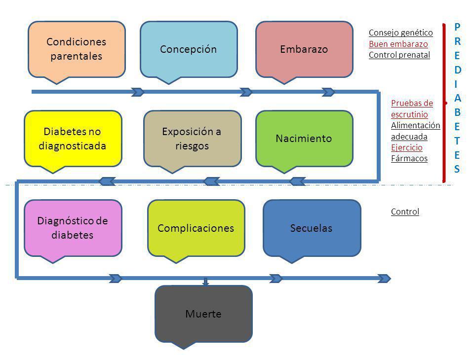 Condiciones parentales Secuelas Diabetes no diagnosticada EmbarazoConcepción Exposición a riesgos Nacimiento Diagnóstico de diabetes Complicaciones Mu