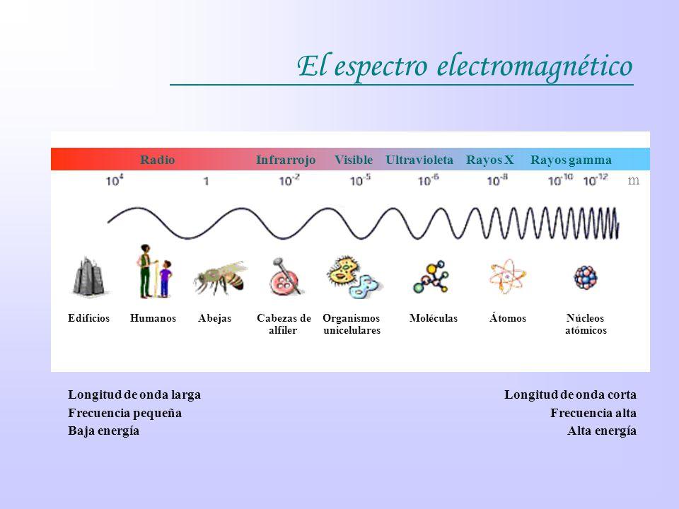 El espectro electromagnético Edificios Humanos Abejas Cabezas de Organismos Moléculas Átomos Núcleos alfiler unicelulares atómicos Radio Infrarrojo Vi