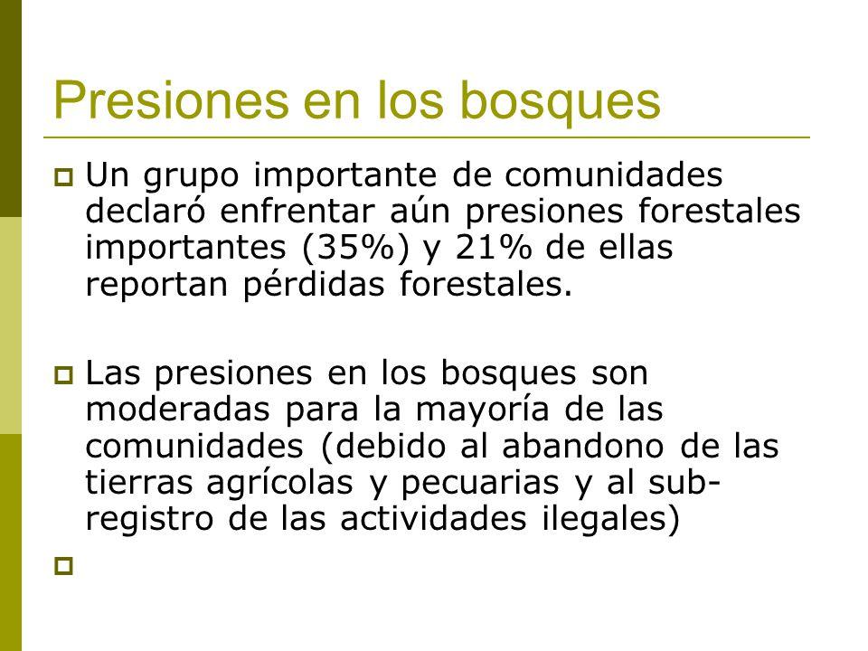 Presiones en los bosques Un grupo importante de comunidades declaró enfrentar aún presiones forestales importantes (35%) y 21% de ellas reportan pérdi