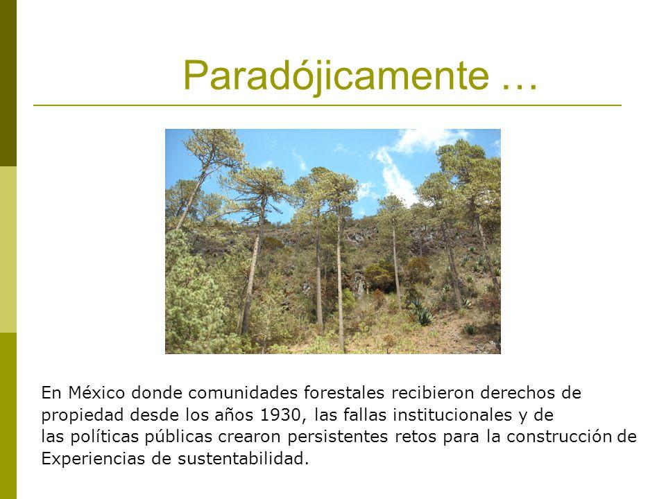 Paradójicamente … En México donde comunidades forestales recibieron derechos de propiedad desde los años 1930, las fallas institucionales y de las políticas públicas crearon persistentes retos para la construcción de Experiencias de sustentabilidad.