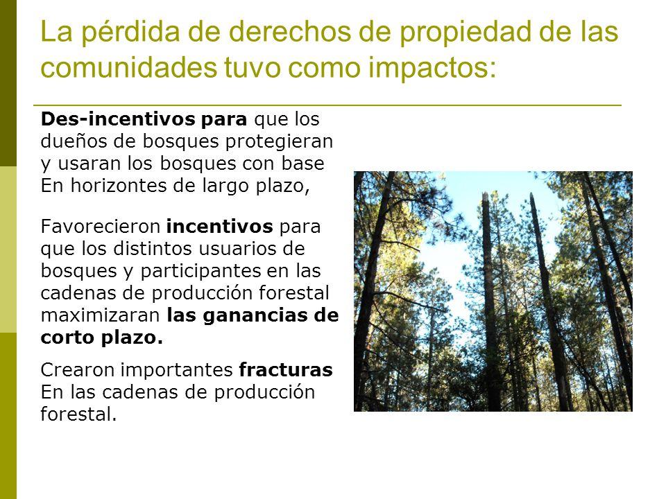 La pérdida de derechos de propiedad de las comunidades tuvo como impactos: Des-incentivos para que los dueños de bosques protegieran y usaran los bosques con base En horizontes de largo plazo, Favorecieron incentivos para que los distintos usuarios de bosques y participantes en las cadenas de producción forestal maximizaran las ganancias de corto plazo.