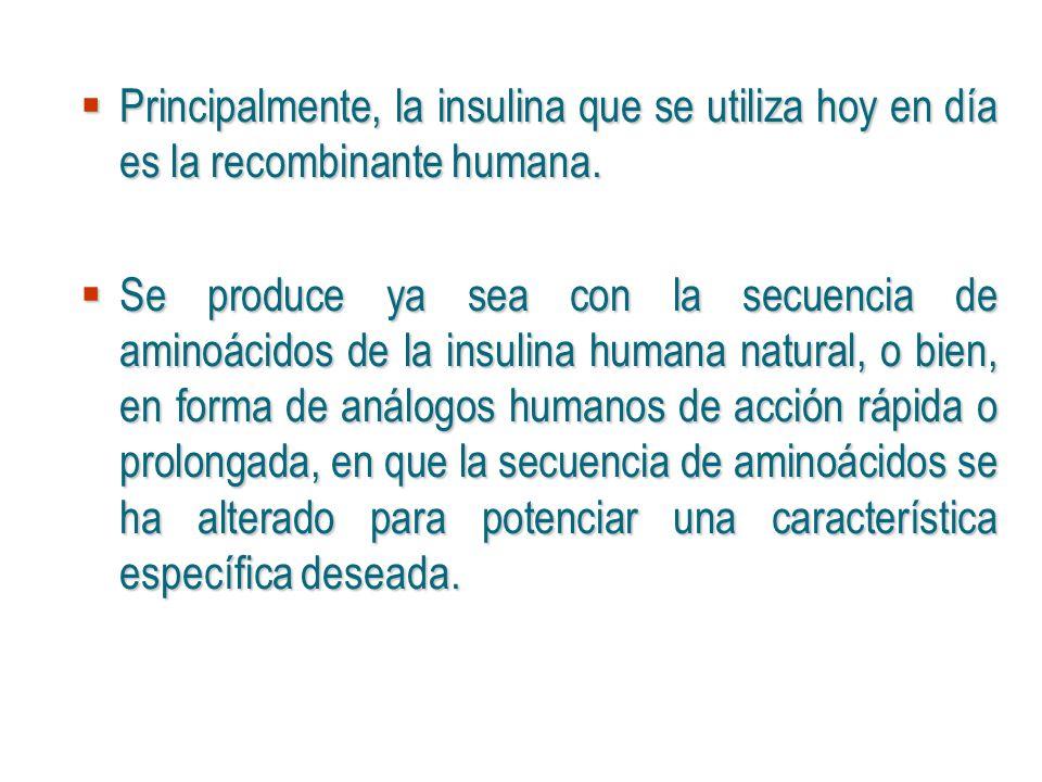Principalmente, la insulina que se utiliza hoy en día es la recombinante humana. Principalmente, la insulina que se utiliza hoy en día es la recombina