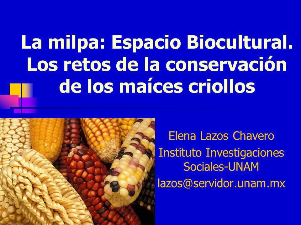 La milpa: Espacio Biocultural. Los retos de la conservación de los maíces criollos Elena Lazos Chavero Instituto Investigaciones Sociales-UNAM lazos@s