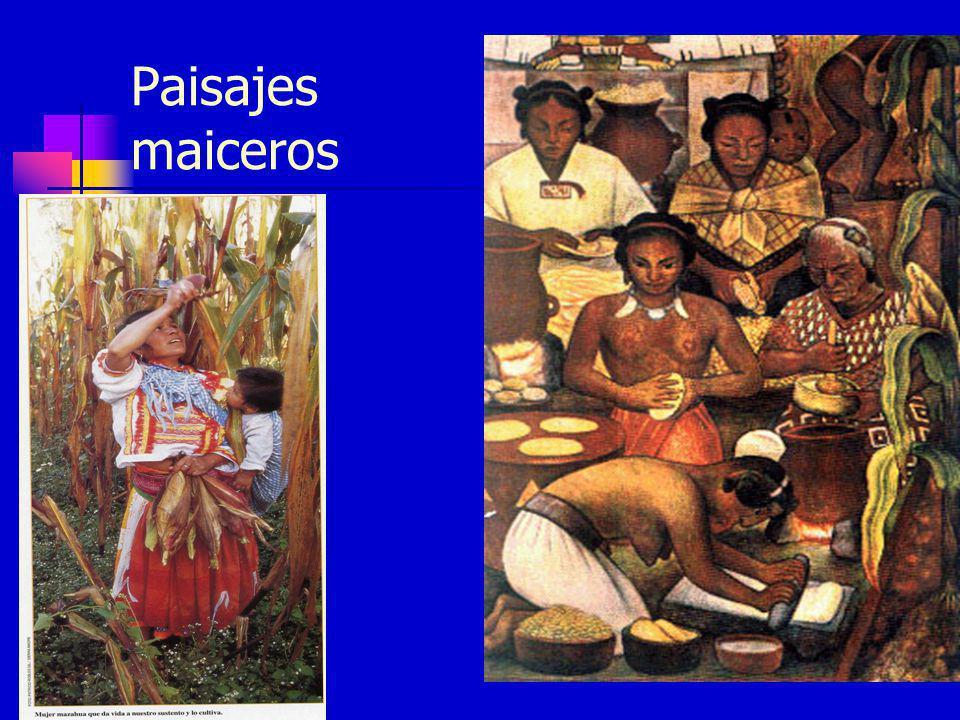 Luchas Sin maíz no hay país, ni tampoco sin frijol Organizaciones campesinas : CONOC (Consejo Nacional de Organizaciones Campesinas), AMUCSS, ANEC, CEPCO, CNOC, FCDCH, MAÍZ, RED MOCAF, UNOFOC) Coordinadora Nacional Plan de Ayala (CNPA) Alianza Nacional de Productores Agropecuarios y Pesqueros (ANPAP-El Barzón) Alianza Mexicana por la Autodeterminación de los Pueblos (AMAP)