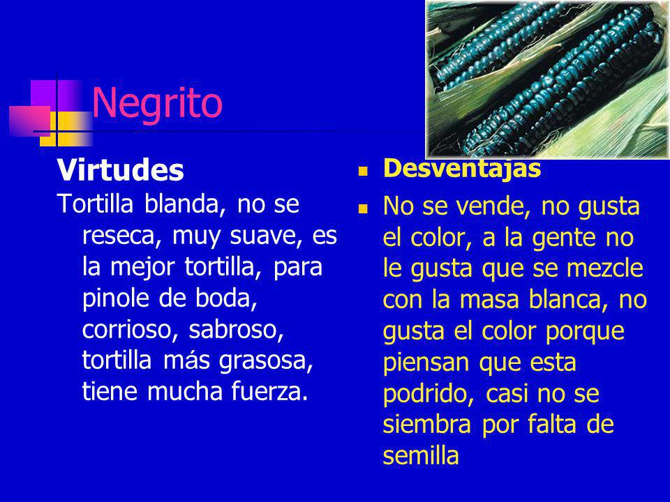Negrito Virtudes Tortilla blanda, no se reseca, muy suave, es la mejor tortilla, para pinole de boda, corrioso, sabroso, tortilla m á s grasosa, tiene