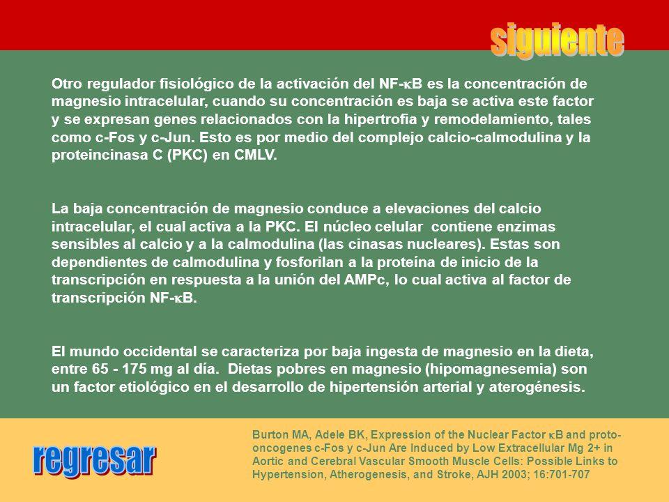 Otro regulador fisiológico de la activación del NF- B es la concentración de magnesio intracelular, cuando su concentración es baja se activa este fac