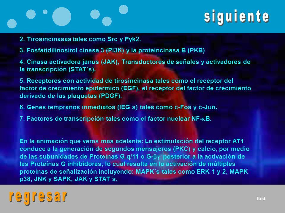2. Tirosincinasas tales como Src y Pyk2. 3. Fosfatidilinositol cinasa 3 (PI3K) y la proteincinasa B (PKB) 4. Cinasa activadora janus (JAK), Transducto