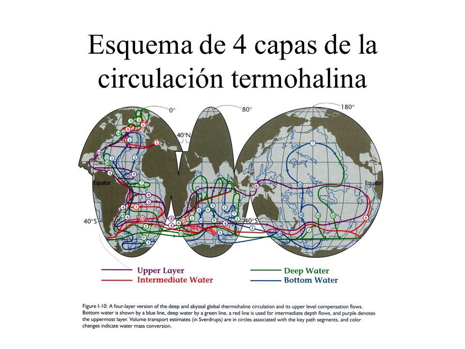 Esquema de 4 capas de la circulación termohalina