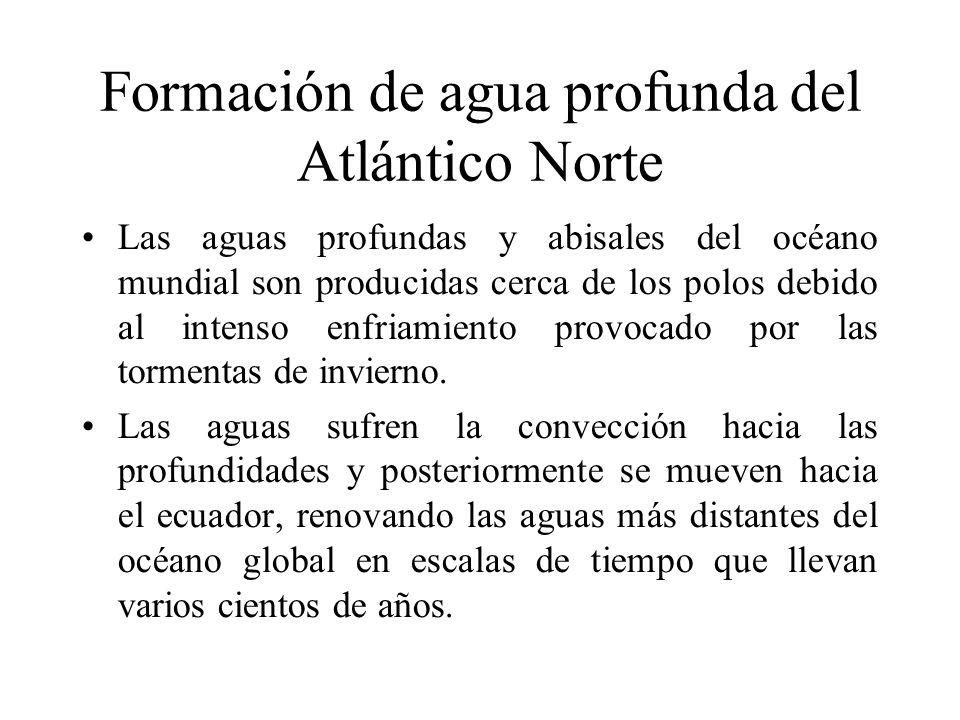 Formación de agua profunda del Atlántico Norte Las aguas profundas y abisales del océano mundial son producidas cerca de los polos debido al intenso e