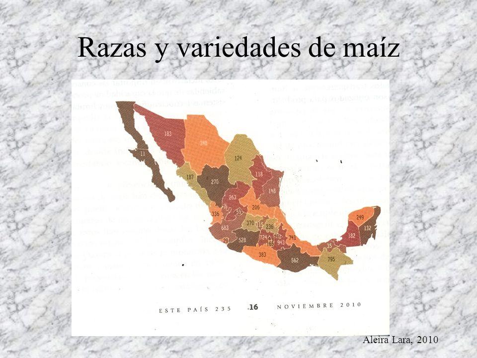 Razas y variedades de maíz Aleira Lara, 2010