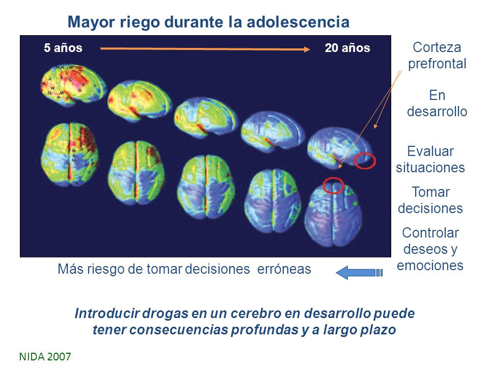 Corteza prefrontal En desarrollo Introducir drogas en un cerebro en desarrollo puede tener consecuencias profundas y a largo plazo Evaluar situaciones Tomar decisiones Controlar deseos y emociones Más riesgo de tomar decisiones erróneas 5 años20 años Mayor riego durante la adolescencia NIDA 2007