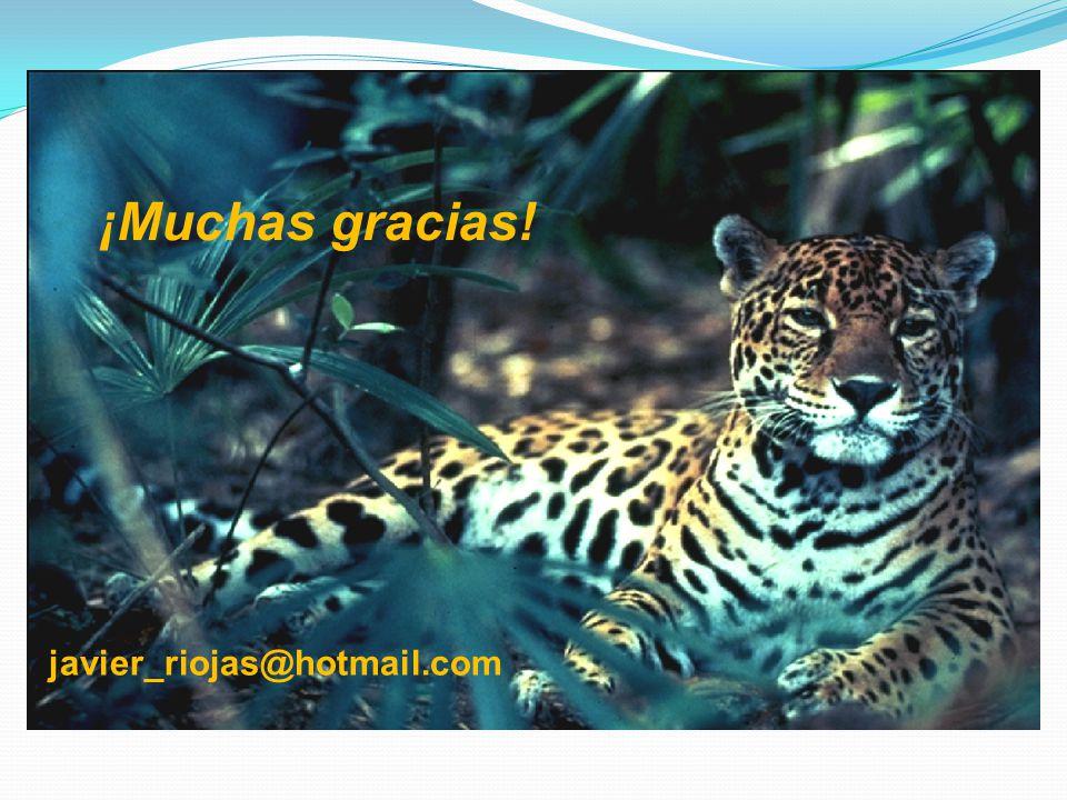 ¡Muchas gracias! javier_riojas@hotmail.com