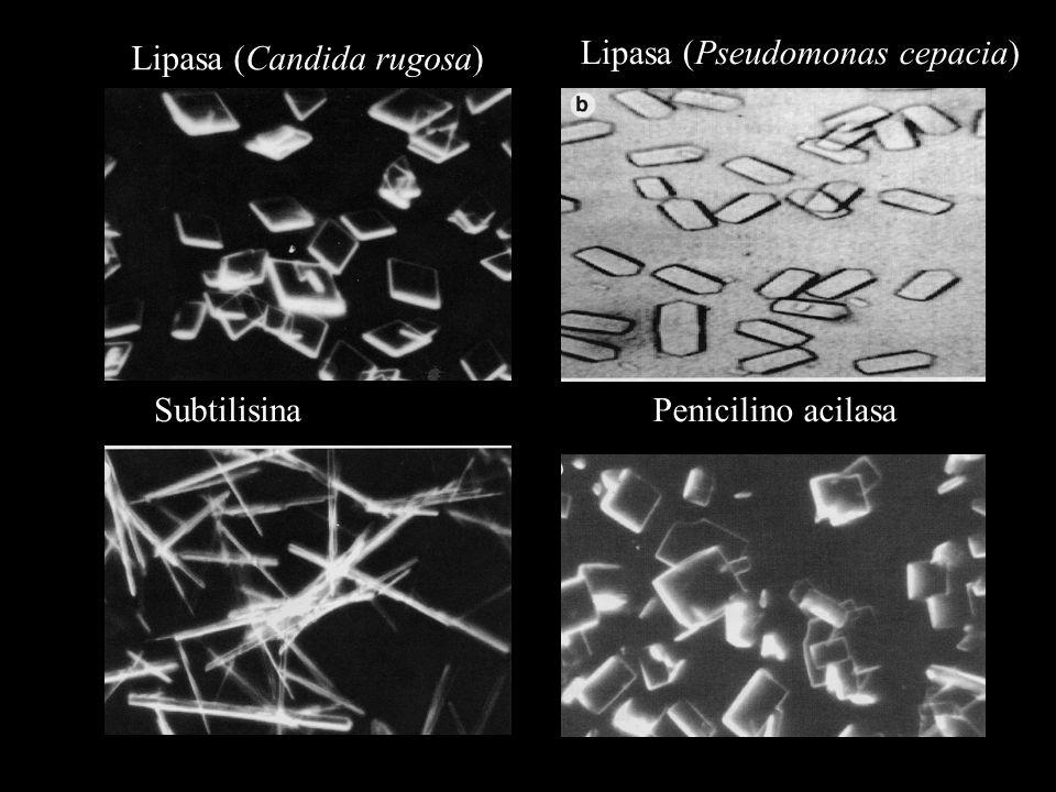 Lipasa (Candida rugosa) Lipasa (Pseudomonas cepacia) SubtilisinaPenicilino acilasa