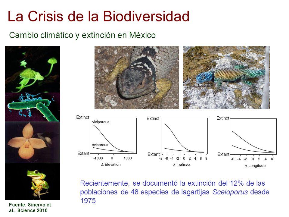 La Crisis de la Biodiversidad Cambio climático y extinción en México Fuente: Sinervo et al., Science 2010 Recientemente, se documentó la extinción del
