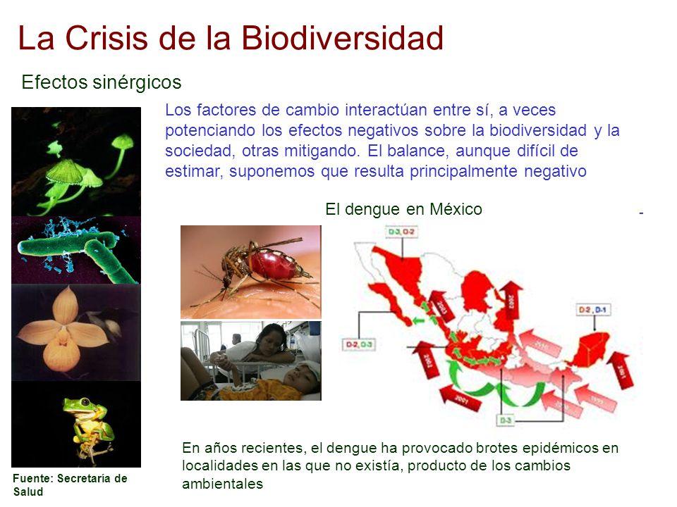 La Crisis de la Biodiversidad Efectos sinérgicos Los factores de cambio interactúan entre sí, a veces potenciando los efectos negativos sobre la biodi