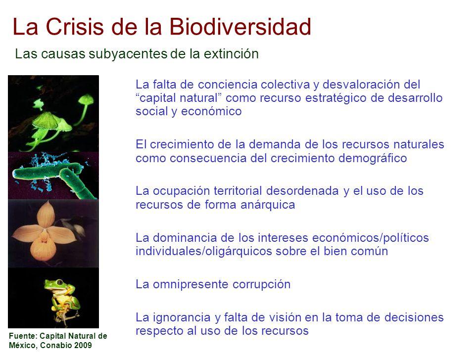 La Crisis de la Biodiversidad Las causas subyacentes de la extinción Fuente: Capital Natural de México, Conabio 2009 La falta de conciencia colectiva