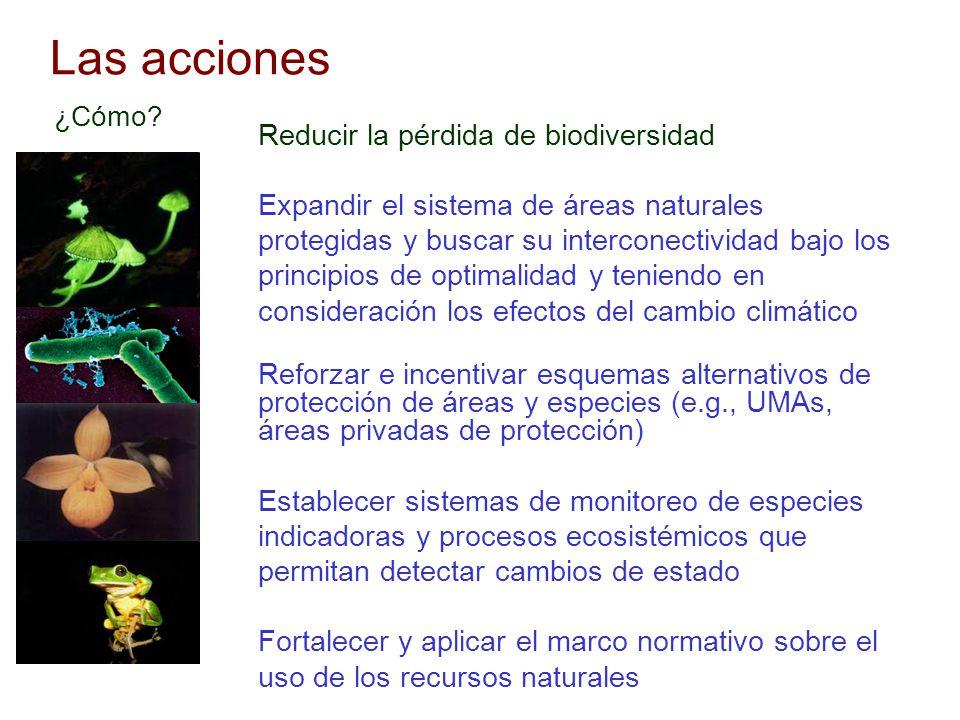 Las acciones Reducir la pérdida de biodiversidad Expandir el sistema de áreas naturales protegidas y buscar su interconectividad bajo los principios d
