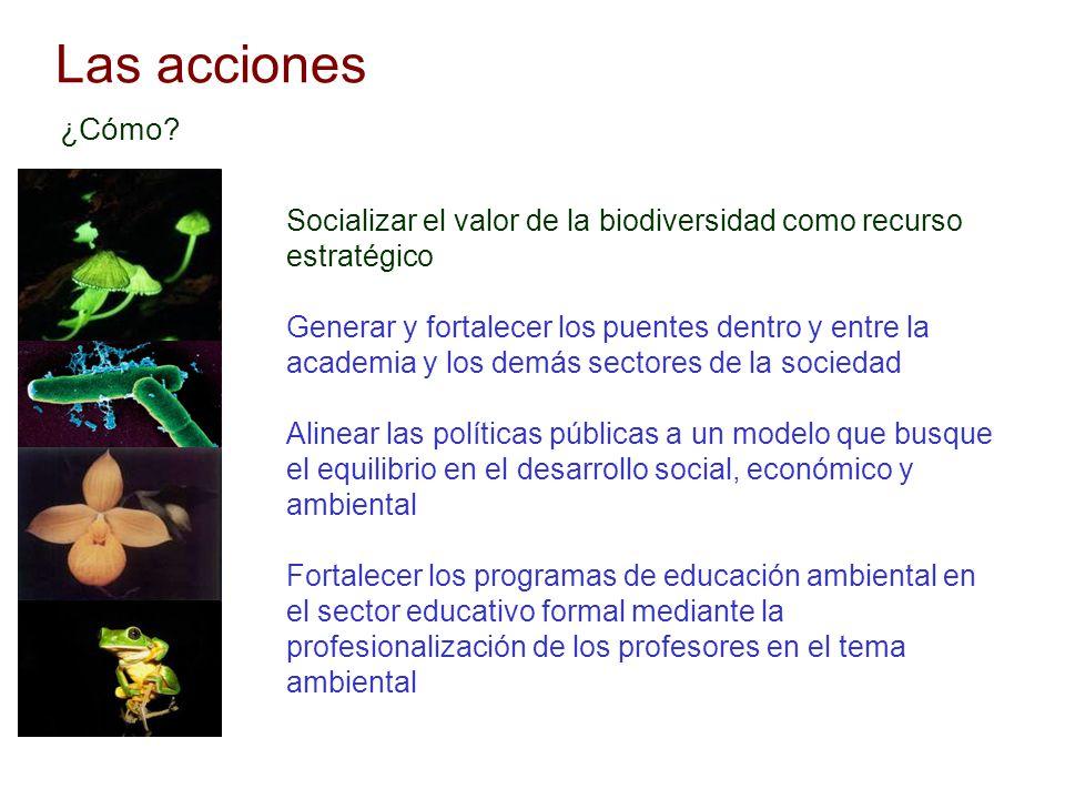 Las acciones Socializar el valor de la biodiversidad como recurso estratégico Generar y fortalecer los puentes dentro y entre la academia y los demás
