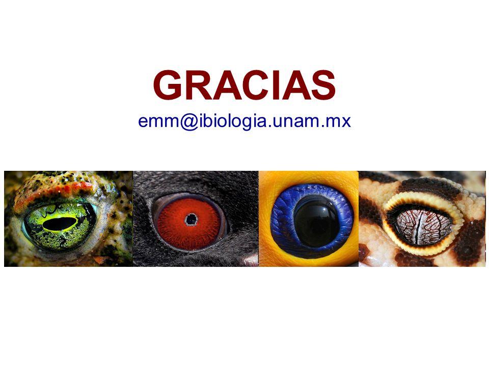 GRACIAS emm@ibiologia.unam.mx