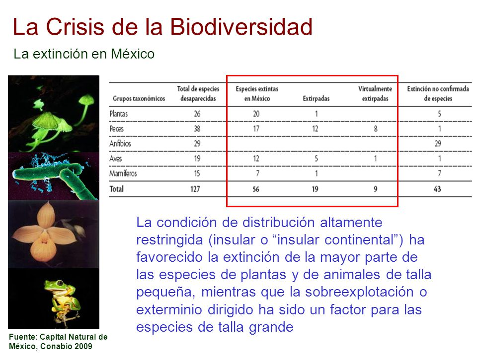 La Crisis de la Biodiversidad La extinción en México Fuente: Capital Natural de México, Conabio 2009 La condición de distribución altamente restringid