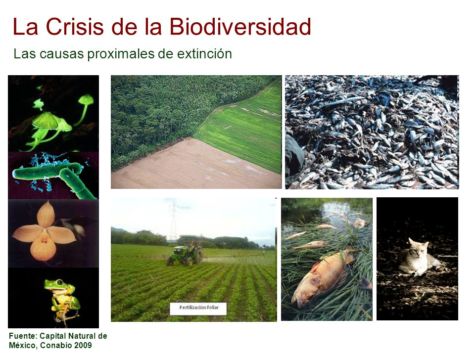 La Crisis de la Biodiversidad Las causas proximales de extinción Fuente: Capital Natural de México, Conabio 2009