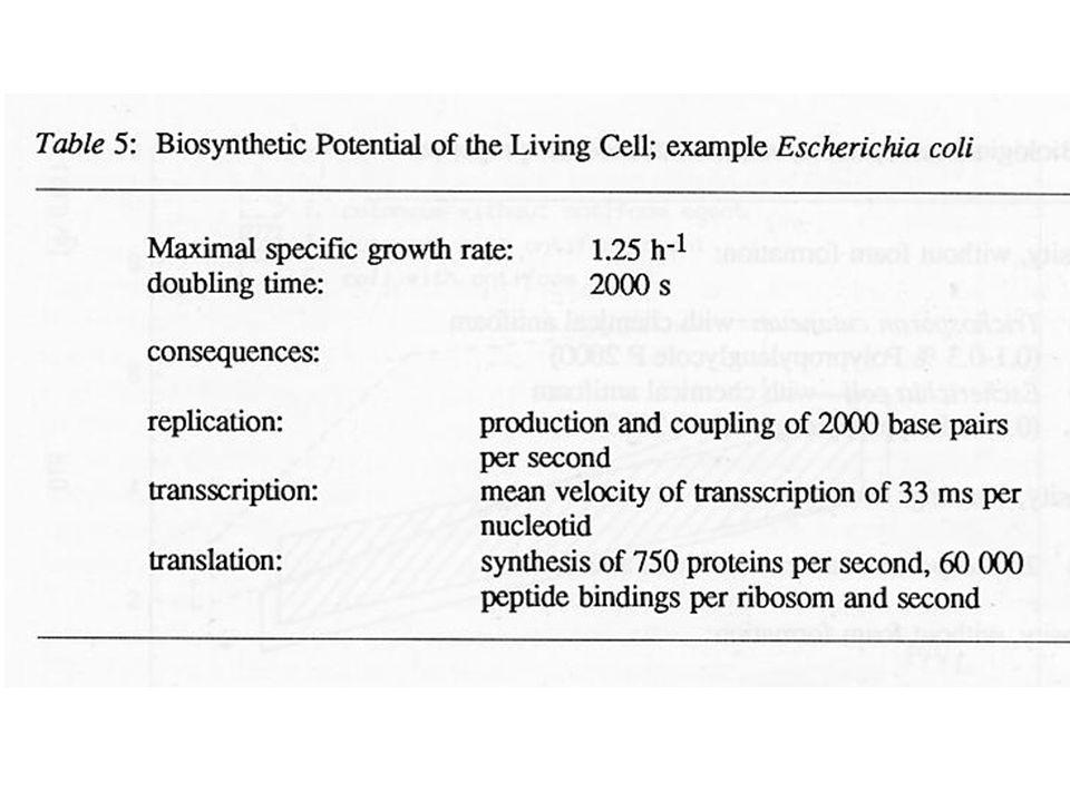 En eucariotes: Q O 2 = Q O 2 max c L K O 2 + c L Q O 2 max (mmol O2 / g cel h) A.