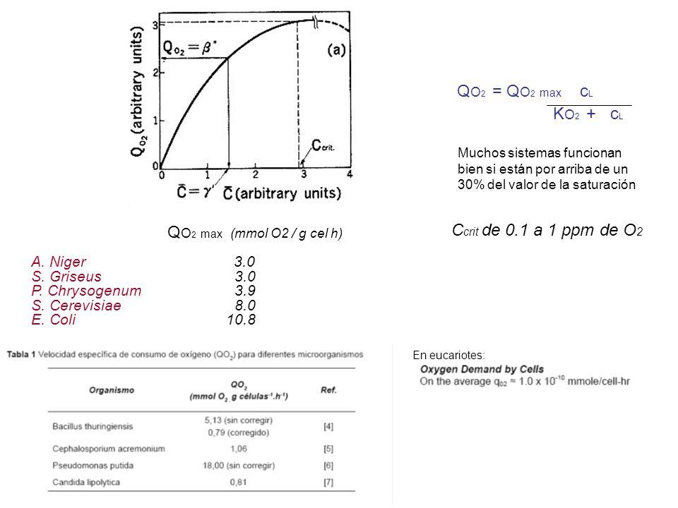 En eucariotes: Q O 2 = Q O 2 max c L K O 2 + c L Q O 2 max (mmol O2 / g cel h) A. Niger 3.0 S. Griseus3.0 P. Chrysogenum3.9 S. Cerevisiae8.0 E. Coli 1