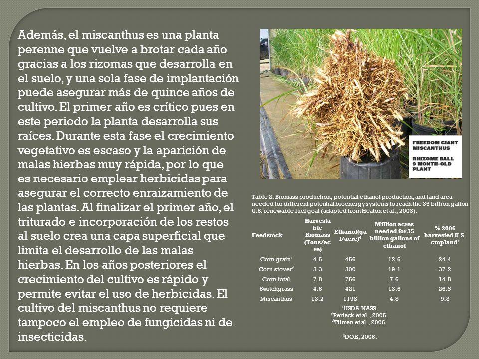 Además, el miscanthus es una planta perenne que vuelve a brotar cada año gracias a los rizomas que desarrolla en el suelo, y una sola fase de implantación puede asegurar más de quince años de cultivo.