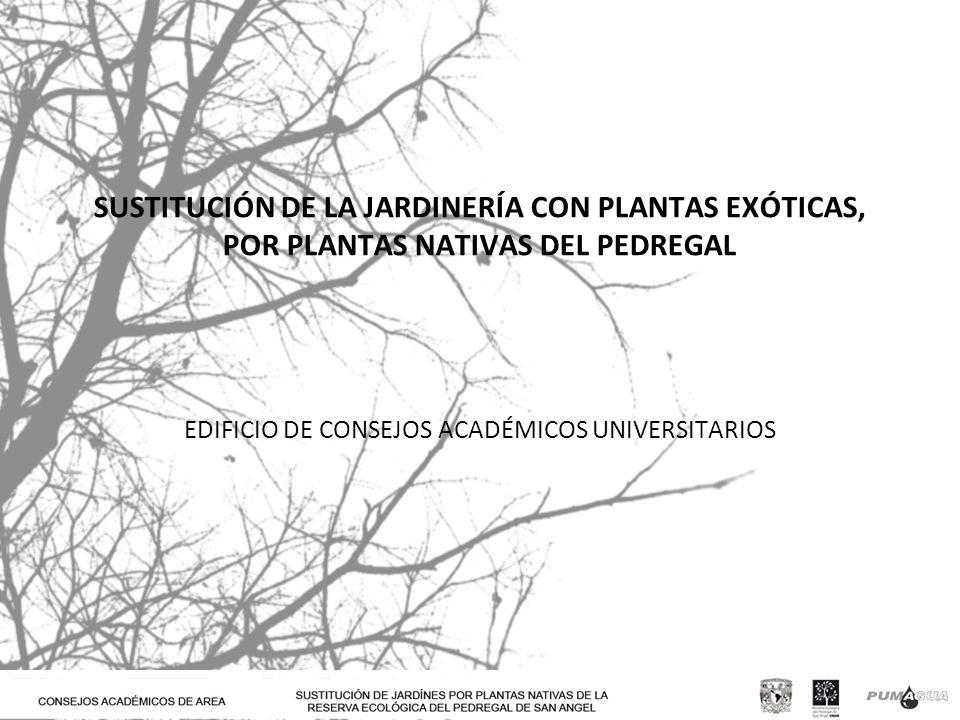 SUSTITUCIÓN DE LA JARDINERÍA CON PLANTAS EXÓTICAS, POR PLANTAS NATIVAS DEL PEDREGAL EDIFICIO DE CONSEJOS ACADÉMICOS UNIVERSITARIOS