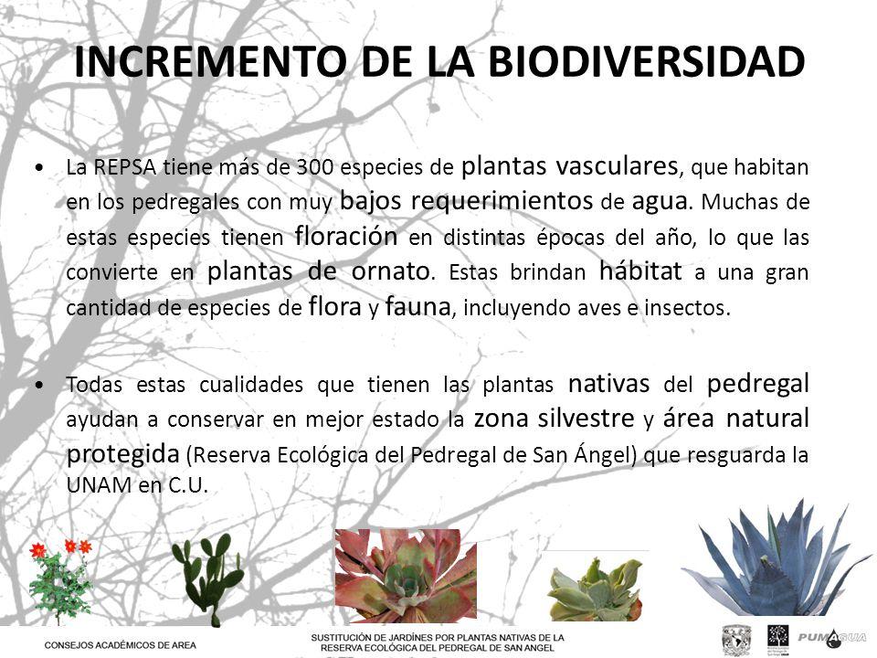 INCREMENTO DE LA BIODIVERSIDAD La REPSA tiene más de 300 especies de plantas vasculares, que habitan en los pedregales con muy bajos requerimientos de