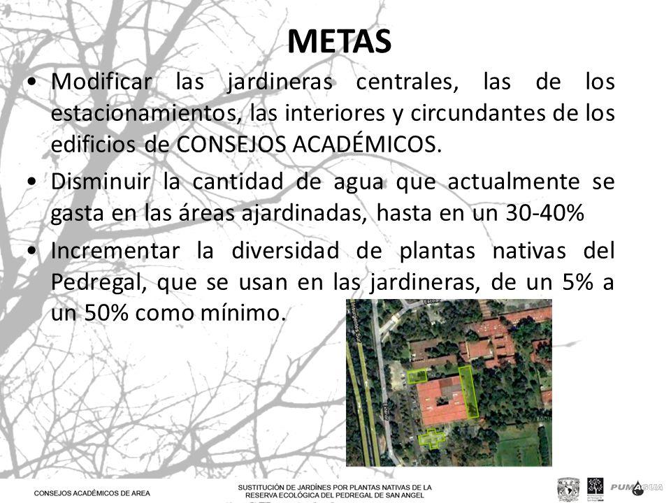 METAS Modificar las jardineras centrales, las de los estacionamientos, las interiores y circundantes de los edificios de CONSEJOS ACADÉMICOS. Disminui