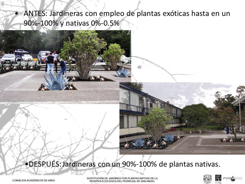 ANTES: Jardineras con empleo de plantas exóticas hasta en un 90%-100% y nativas 0%-0.5% DESPUÉS: Jardineras con un 90%-100% de plantas nativas.